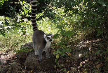 Anja Reservat in Madagaskar