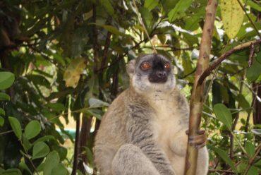 Eröffnung eines neuen Nationalparks: Park Marolambo- in der Region von Amoron'i Mania