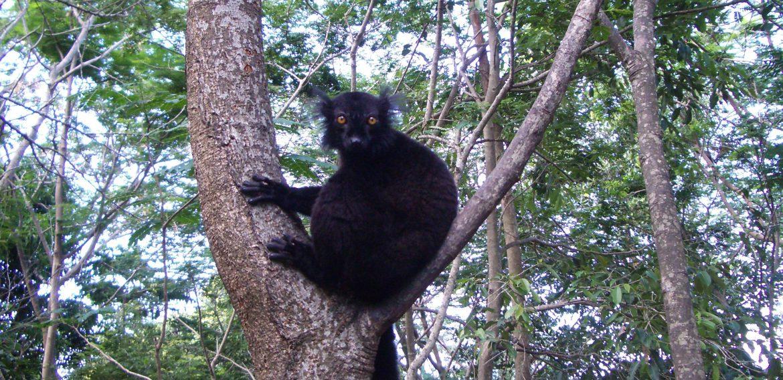 Lokobe – Das letzte Urwaldgebiet der Region von Nosy Be